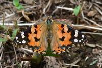 花壇に集う蝶たち - *la nature 2*
