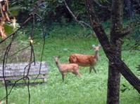 鹿の親子 - burnet hillのパートナーたち