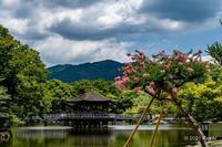 サルスベリ 奈良公園 - toshi の ならはまほろば