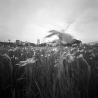 小岩菖蒲園で針穴 - はりあなのこころ