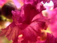 On the petals - 風の随に...     fudeen's Photologue