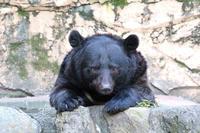 サマーカットなツキノワグマ「ソウ」~道産子!「桃太郎&仁太郎」(多摩動物公園 August 2020) - 続々・動物園ありマス。