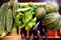 ■昨日の菜園収穫品【先ずは簡単5分!! 茄子の浅漬けから作りました^^】 - 「料理と趣味の部屋」