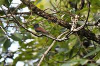 本日の森で・・・ - 鳥と共に日々是好日③