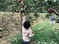 子どもとリンゴ狩り - ナナイロノート