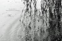 *Rain* - It's only photo 2