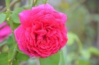 秋の気配の薔薇庭で - 季節の風を追いかけて