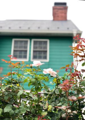 薪割りマコのバラの庭