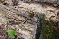 山頂の訪問者 - 蝶と蜻蛉の撮影日記