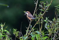 鳥の姿が少ない公園 - 季節の映ろひ