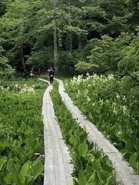 尾瀬ヶ原トレッキング - 歩のち登、ときどき走。