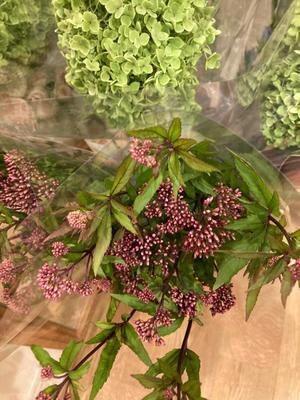 お花の買い出しの日の楽しみ - ワットモーイ  オランダのフラワーアレンジメント教室