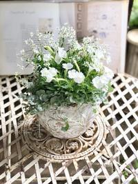 小さなホワイトペチュニア - Gardener*s Diary