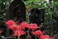 彼岸花と石仏が絵になる興禅院(*^-^*) - 自然のキャンバス