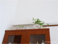 増える植物とアクセサリーセールのお知らせ - T's Taste