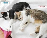 台風の猫たち(動く咲セリ夫婦のYouTube) - ちいさなチカラ