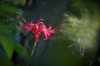 台風一過で青空。連休中日で結構、混んでました@向島百花園 - meの写真はザンス