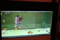 ♪金魚ミュージアムにて・・・♪ - 今を楽しく・・・幸せなひととき