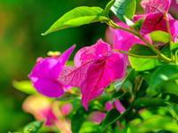 葉っぱと花弁との競演 - 風の随に...     fudeen's Photologue