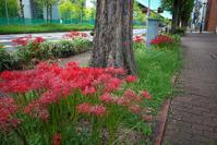 花咲く街角 210919 #1 - LOOSE