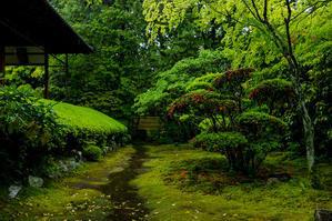 新緑の頃(桂春院) - 花景色-K.W.C. PhotoBlog