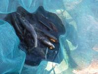 2021年8月23日?~9月5日?の鮎釣り - 川と海と友
