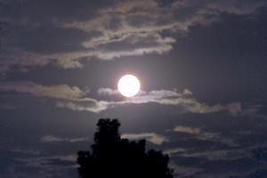 十五夜、満月、丸い芋と猫 - 世話要らずの庭