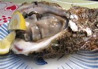 新鮮な採れたて魚介類をその場でいただくことができる鮮魚専門店ならではの飲食コーナー。──「大松水産近江町旬彩焼」 - Welcome to Koro's Garden!