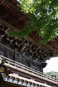 英勝寺 初秋の花 - 暮らしを紡ぐ2