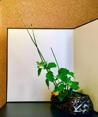 鬼灯 - 東京いけばな日記 花と暮らしと生活と