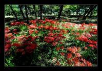 雑木林に咲く - Desire