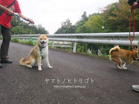 8歳と9歳のワンプロ【フォトムービーあり】 - yamatoのひとりごと