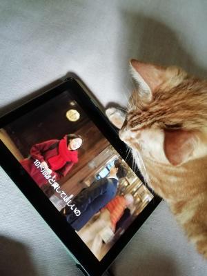 猫たち近影 - ないものを あるもので