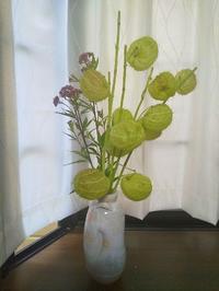お花と久しぶりの眩暈 - 十色生活