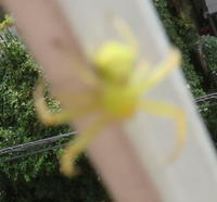付いてきちゃった⁉ 分区園から - 鶴見分区園花壇クラブブログ