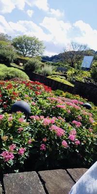 津久井湖のお花畑を見に行きました - しらゆり介護サービスblog