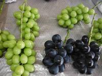 ぶどうの収穫・発送に追われた9月がようやく終わり - 信州ピース&ナチュラルだより