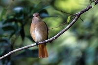 渡り来る鳥、渡り去る鳥 - やきとりブログ
