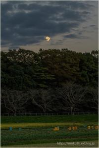 月昇る - muku3のフォトスケッチ