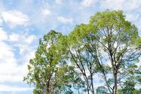 大好きな犬山城を美しく撮りたい② - カオルコライ歩