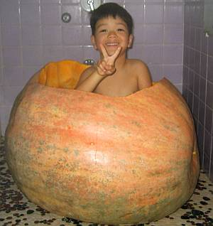 巨大かぼちゃを作ろう!