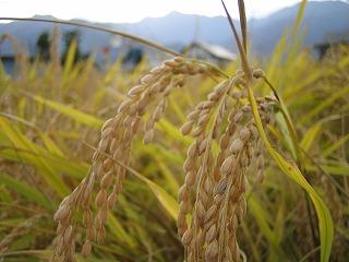 米作り イン 魚沼