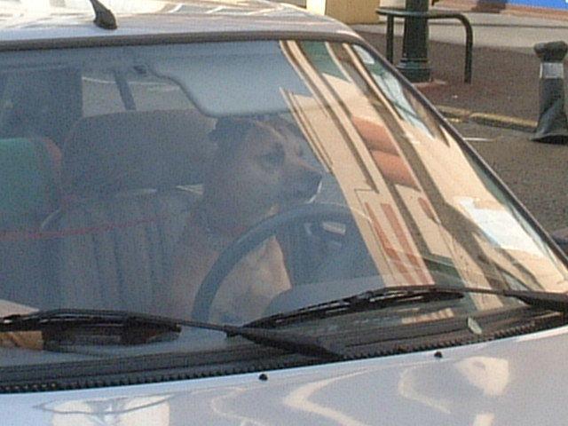 運転するイヌ_a0008105_20271.jpg