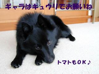 a0009750_10346.jpg