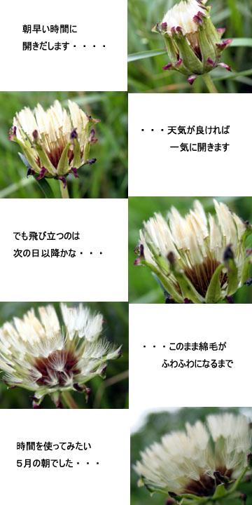 a0013879_235126.jpg