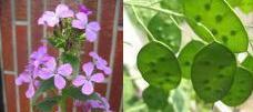 ルナリア・アンヌアの種何かに似てるでしょ?_a0015682_20103.jpg