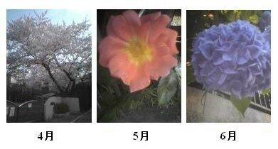 季節の花々_a0018105_112322.jpg