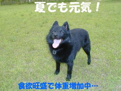 a0009750_13641.jpg