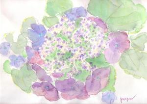 garaponの紫陽花の花_a0015682_205151.jpg
