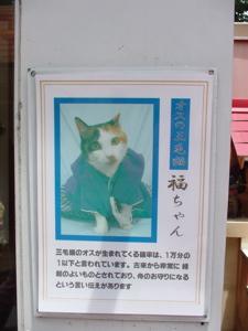三毛猫_a0027275_7431.jpg